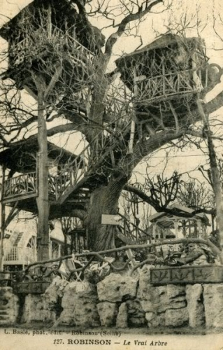 Robinson_le_vrai_arbre_wiki.jpg